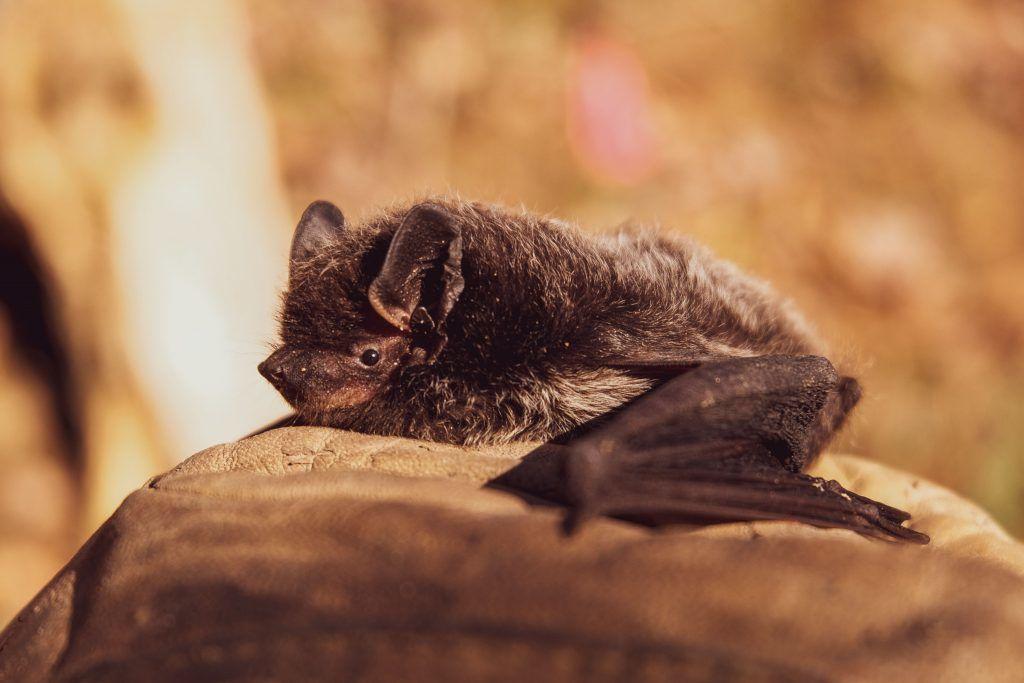 significado del murciélago