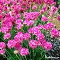 Các loài hoa khác
