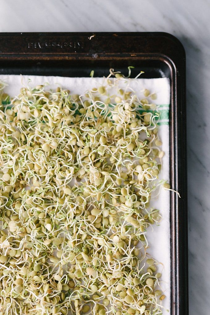 Cooking Basics How To Make Sprouted Lentils Our Salty Kitchen