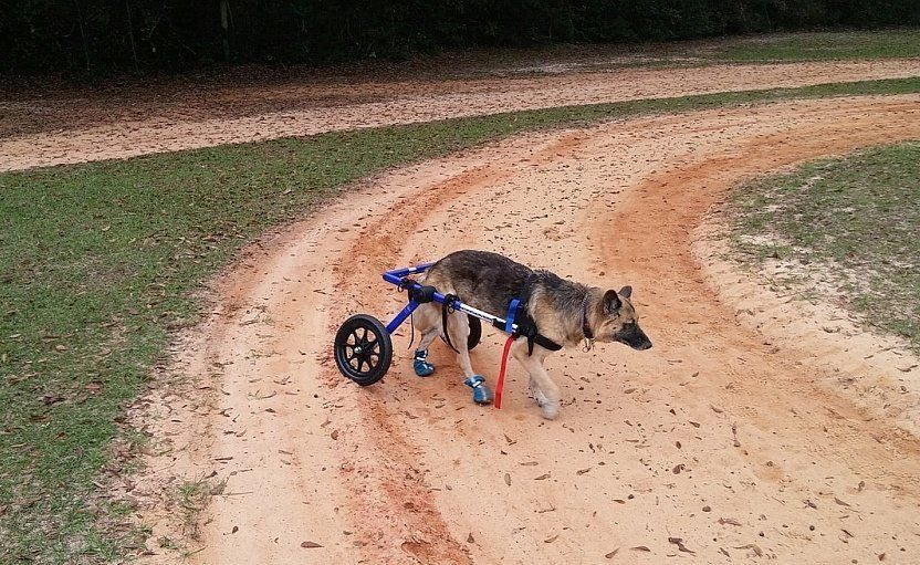 dog mobility aid
